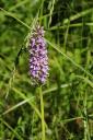 Sertel Orchideenweg